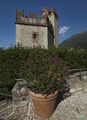 Lago di Garda ... Malcesine (capellini.chiara) Tags: gardalago gardasee flower castellodimalcesine lagodigarda malcesine