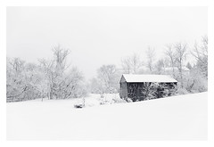 Forgotten (bprice0715) Tags: canon canoneos5dmarkiii canon5dmarkiii landscape landscapephotography nature naturephotography beautiful beauty beautyinnature blackandwhite bw blackwhite monochrome mono snow snowylandscape snowing white fineart barn trees cold frigid winter
