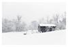 Forgotten (bprice0715) Tags: canon canoneos5dmarkiii canon5dmarkiii landscape landscapephotography nature naturephotography beautiful beauty beautyinnature blackandwhite bw blackwhite monochrome mono snow snowylandscape snowing white fineart barn trees cold frigid winter
