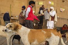 Morning, Benaras (SaumalyaGhosh.com) Tags: people life streetphotography street color india varanasi dogs benaras tea ghat