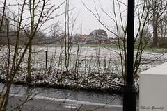 Ooievaars bij Huis Brakel (Marja S) Tags: kasteelbrakel brakelsbos landgoedbrakel brakel gelderland