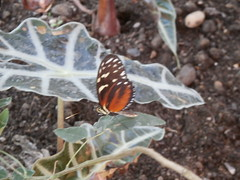 P4190148 (Steve Guess) Tags: horniman museum butterfly forest hill london england gb uk