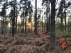 Sundown Through The Trees (Marc Sayce) Tags: trees sunset sundown woolmer ranges forest conford longmoor south downs national park hampshire spring april 2018