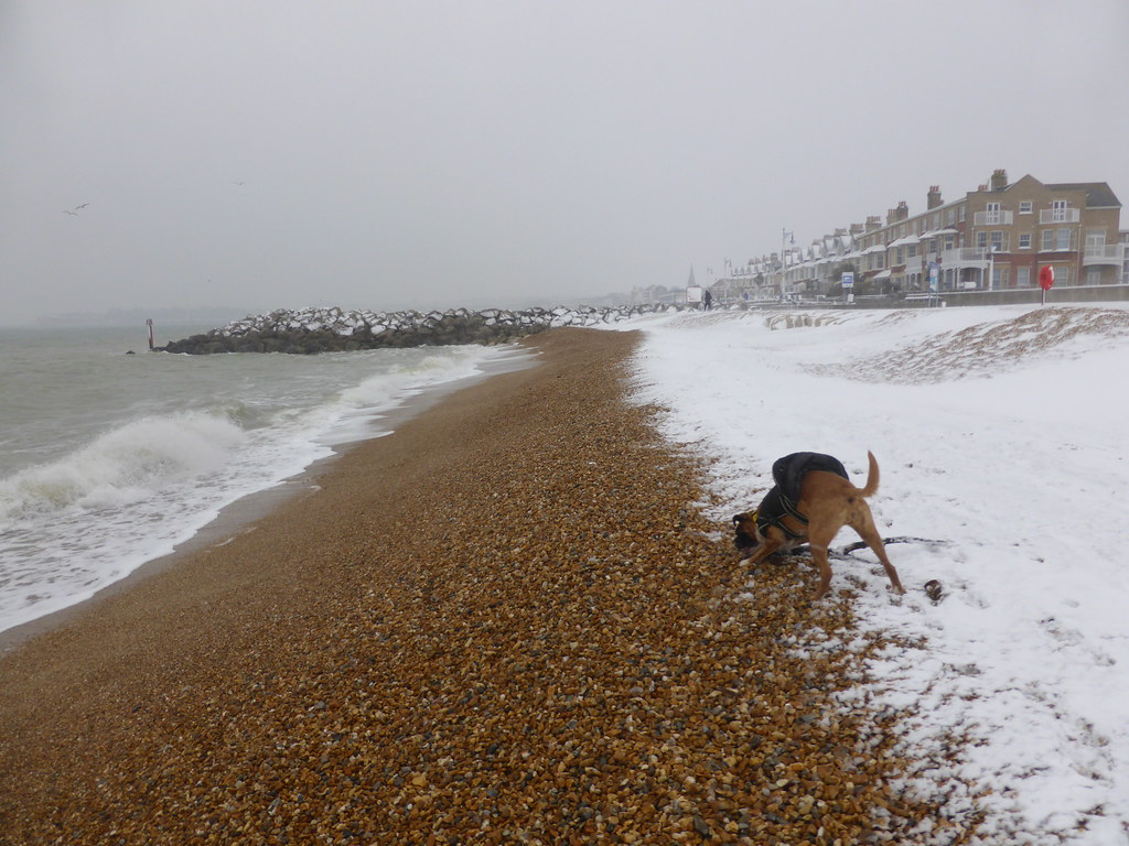 Dog Friendly B B Weymouth
