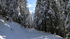 La bellezza svelata (_Nick Outdoor Photography_) Tags: img5829 forestadelmontepenna montepennino appennino prospettiva paesaggioinnevato