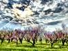 Hello Spring! (Ultreya Photo) Tags: erba cielo fiore albero paesaggio campo hdrart hdr hello spring