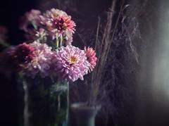 Mum's the Word (Anne Worner) Tags: anneworner lensbaby composerpro doubleglass bend blur selectivefocus chrysanthemum mum flowers blooms blossoms flowering manualfocus manualfocuslens stilllife vase grass