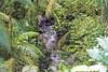D72_7569_PC (richard.pockat) Tags: heredia costarica cr