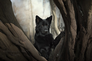 guardian of a magical forest