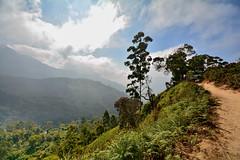 India - Kerala - Munnar - Top Station - 59 (asienman) Tags: india kerala munnar topstation asienmanphotography