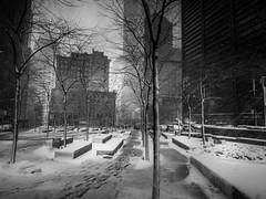 Make Tracks (C@mera M@n) Tags: blackandwhite city financialdistrict manhattan monochrome ny nyc newyork newyorkcity newyorkcityphotography newyorkphotography park people place places rain snow snowstorm storm street streetphotography urban weather outdoors