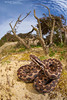 Vipère aspic (Matthieu Berroneau) Tags: sony alpha nature france herpéto wildlife animal full frame a7ii 7ii 7mk2 sonyilce7m2 laea4 28 herping herpeto reptile reptilian reptilia serpent serpente snake serpentes snakes serpiente vipera field herp vipère aspic asp vibora aspid subspecies zinniker пепелянка aspis sugegorria venin venimeux venimous venon venomous poisonous serpents aspics zinnikeri vipèreaspic viperaaspiszinnikeri aspviper viperaaspis sigma 15 fisheye best sonya7ii sonya7mk2 sonyalpha7mark2 sonyalpha7ii sigmaobjectiffisheyedg15mmf28 sigma15mmf28exdgdiagonalfisheye sonylaea4 natter dune sand habitat milieu dunaire sable grandangle soleil sun exposition