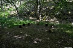 Lugar de reunion. (Howard P. Kepa) Tags: castillaleon burgos orbanejadelcastillo gr99 cañonesdelebro claro troncos arboles sombras