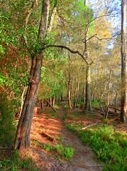 Evening track II (elphweb) Tags: bush bushy forest tree trees woods hdr highdynamicrange nsw australia seaside