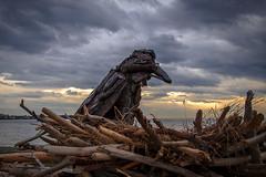 """Nesting Raven"" (Paul Rioux) Tags: beach waterfront driftwood art nestingraven creature prioux clouds weather storm esquimaltlagoon bird raven nest wood paullewis"