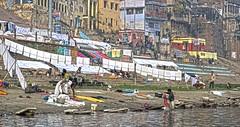 Varanasi Laundry Ghat DSC_8894 (JKIESECKER) Tags: varanasiindia india varanasi rivers peopleandnature people washing laundryday laundry portrait peopleportraits citylife cityscenes