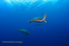 Happy Old Couple (kayak_no1) Tags: nikon d800e nauticamhousing 15mmsigmafisheye fisheye ysd1 underwater underwaterphotography wa wideangle diving scubadiving uw moalboal philippines