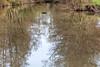 2018-04-08--TIgnécourt0014.jpg (heiserge) Tags: vosges tignécourt eau reflection nature water glare reflets rivière france europe paysages lorraine