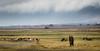 Ngorongoro Crater Bowl (Beppe Rijs) Tags: africa afrka crater krater ngorongoronp tansania tanzania