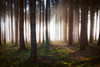 Portal (der_peste (on/off)) Tags: forest light raysoflight raysofgod godrays sunrays lightrays mist fog woods atmosphere mood moody sunlight sunset sunrise trees
