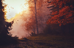 Breathing the fire (MilaMai) Tags: autumn fog forest sunrise dawn nature fall moody landscape finland leaves leaf red mist foggy trees morning milamai maisema