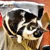 Sabes que es hora de hacer dieta cuando ya no cabes en la #caja del año pasado loves #cajas #gatos #cats #photocats #pets #mascotas #neko #meow #gatze #gatto #chat #pets #mascotas #instapets #koshka #catinbox (Carolina_BCN) Tags: caja cajas gatos cats photocats pets mascotas neko meow gatze gatto chat instapets koshka catinbox