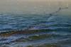 Filets de pêche (dominique 15) Tags: bages peche filet mediteranee mer etang