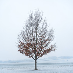 Here Today (Damian_Ward) Tags: ©damianward damianward trees fog mist forest snow winter cold tree lone