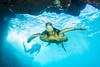 turtle2Mar26-18 (divindk) Tags: cheloniamydas hawaii hawaiianislands makenabeach makenalanding maui scientificname scubadiving tamaraklug underwater diverdoug diving endangeredspecies greenseaturtle marine ocean reef sea seaturtle turtle underwaterphotography