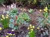 2018 Germany // Unser Garten - Our garden // im April (maerzbecher-Deutschland zu Fuss) Tags: garten natur deutschland germany maerzbecher garden unsergarten 2018 april