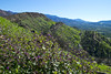Valley View Preserve (Nathan Wickstrum) Tags: valley view preserve ojai land conservancy ovlc spring 2018 wishbone plant