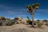Joshua Tree At Night (luke.me.up) Tags: california d850 joshuatree nikon roadtrip night nightphotography longexposure tree rocks nature