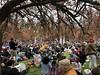 Hanami sous les fleurs des cerisiers au Parc de Sceaux - Sceaux / Antony ( 92 ) (stefff13) Tags: parc sceaux château hanami japon