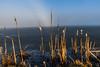 Morning Sun (schda22) Tags: lake see morning frosty ice sun bavaria bayern deutschland oberpfalz weiher upperpalatinate canon 5d3 tamron 2470