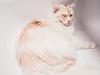 white (camerue) Tags: mainecoon pet cat bathroom