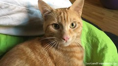 Thu, Mar 15th, 2018 Lost Male Cat - North Circular Road, Dublin 1 (Lost and Found Pets Ireland) Tags: lostcatnorthcircularroaddublin lost cat north circular road dublin march 2018