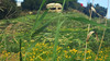 Guarding the flowers (david_m.hn) Tags: blumen flowers bunker hill hügel landschaft landscape sicily sizilien italy italien
