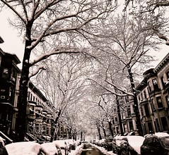 Snow drenched Park Slope. (goldensummer1200) Tags: brownstone winterwonderland nyc brooklyn parkslope nor'easter