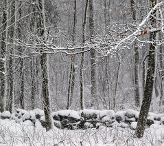 You're leaving, right? (cheryl.rose83) Tags: winter snow trees snowing stonewall