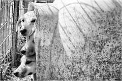 mondo cucciolo! (andaradagio) Tags: andaradagio bianconero bw canon dog cane miglioramicodelluomo nadiadagaro