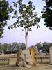 Khajuraho 02 2015in03kjrh_051 (juggadery) Tags: 2015 india madhyapradesh khajuraho