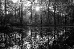 Each shadow has its own secret (gambajo) Tags: 1year1town1lens brühl project blackandwhite blackwhite black white bw outdoors nature landscape park forest water lake pond trees sun sunlight x100s fujix100s fujifilmx100s moody mood leafs reflection dark shadows public schlosspark augustusburg bog swamp moor
