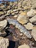 IMG_20180409_115958hdr (joeginder) Tags: jrglongbeach oceantrails whitepoint hiking pacific california ocean beach rocky geology palosverdes sanpedro