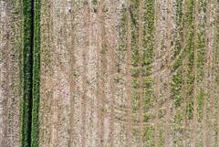 Abstract aerial (kap_jasa) Tags: kiteaerialphotography kite flying abstract aerial art field tracks marsh ljubljanamarshes bistra slovenia
