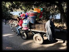 """""""Juraría q cayó algo"""" (mariadoloresacero) Tags: acero mdacero sony ilca68 marchandises mercancías ânes charrete transport transporte asno carreta roads routes carreteras campagne campos egypt egypte egipto"""