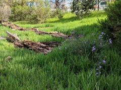 Fallen Log (Kelson) Tags: madronamarsh marsh hike torrance california nature meadow