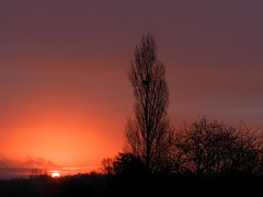 19 mars 2018 le matin (Daniel Biays) Tags: sunrise leverdusoleil arbres trees groupenuagesetciel
