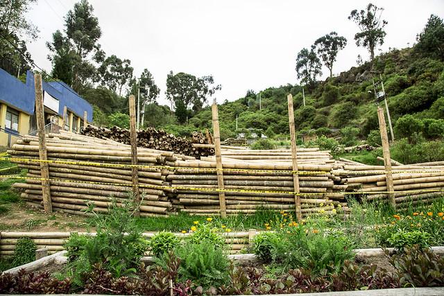 Guadua para obras de infraestructuras ecológicas