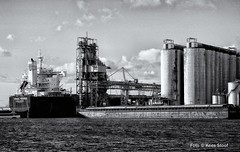 Vlothaven, 10-2-18 (kees.stoof) Tags: vlothaven amsterdam west westpoort westelijkhavengebied