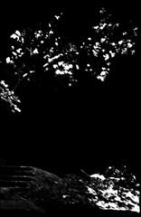 Neige et noir, un réverbère (Rachelnazou) Tags: caffenol blackwhite analog argentique minolta ilford film